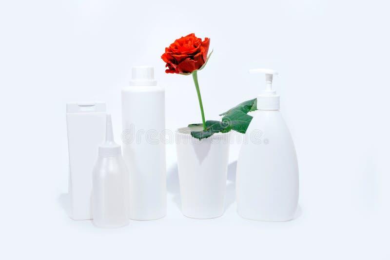Le rouge de pot de distributeur a monté la femme blanche février de Saint Valentin de vert de tasse de cadeau de fond de bouteill photos stock