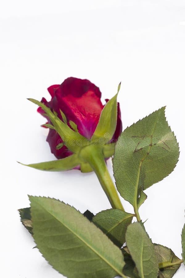 Download Le rouge a monté image stock. Image du valentine, bouquet - 77152205