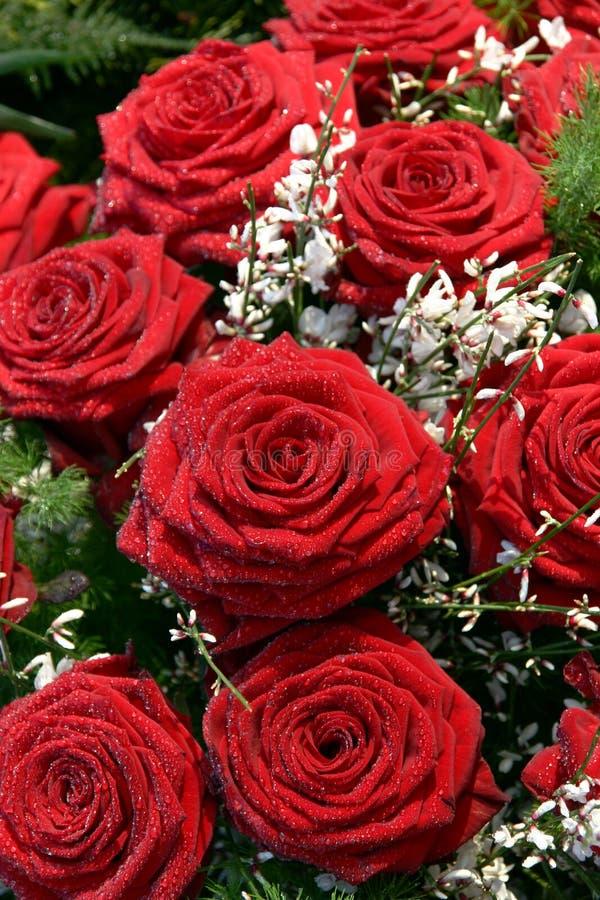 Le rouge a monté avec les fleurs blanches image libre de droits