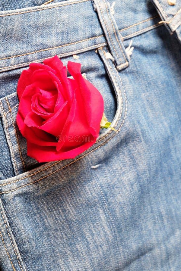 Le rouge a monté dans une poche de treillis pour Valentine& x27 ; concept de jour de s photos libres de droits