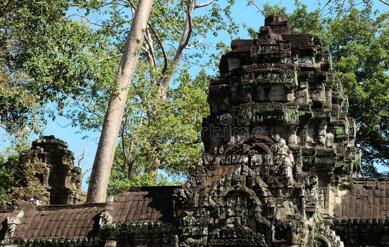 Le rovine del complesso del tempio dei tum Prohm in Cambogia Patrimonio architettonico dell'impero khmer Un capolavoro del mondo fotografie stock
