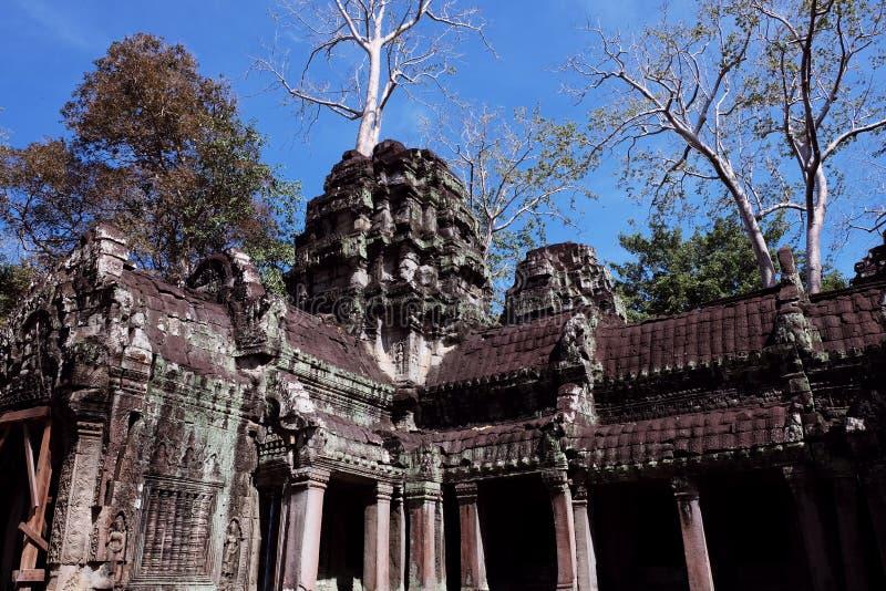 Le rovine del complesso del tempio dei tum Prohm in Cambogia Patrimonio architettonico dell'impero khmer Un capolavoro del mondo immagine stock