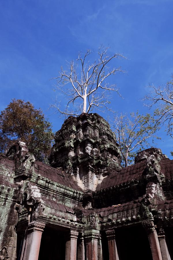 Le rovine del complesso del tempio dei tum Prohm in Cambogia Patrimonio architettonico dell'impero khmer Un capolavoro del mondo fotografia stock