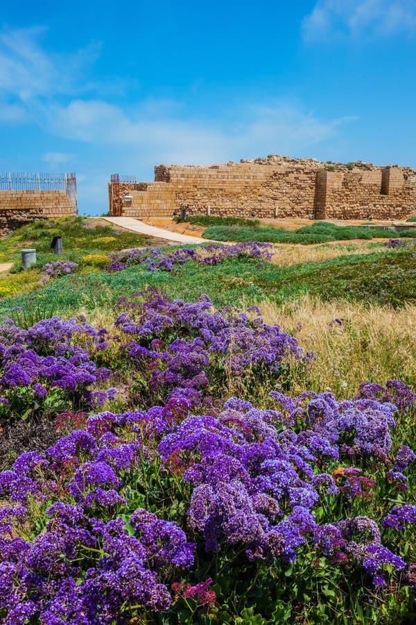 Le rovine delle pareti e dei fiori della lavanda fotografia stock libera da diritti