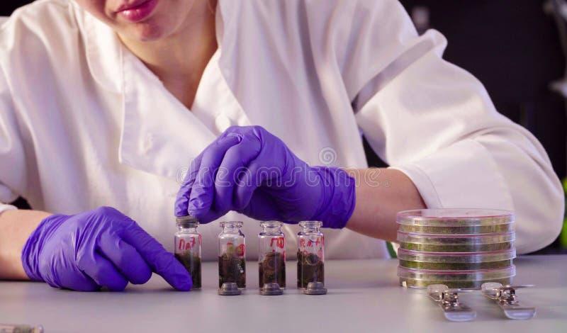 Le ` s de scientifique remet le dissolvant de versement dans les bouteilles images libres de droits