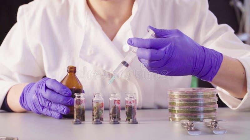 Le ` s de scientifique remet le dissolvant de versement dans les bouteilles photographie stock