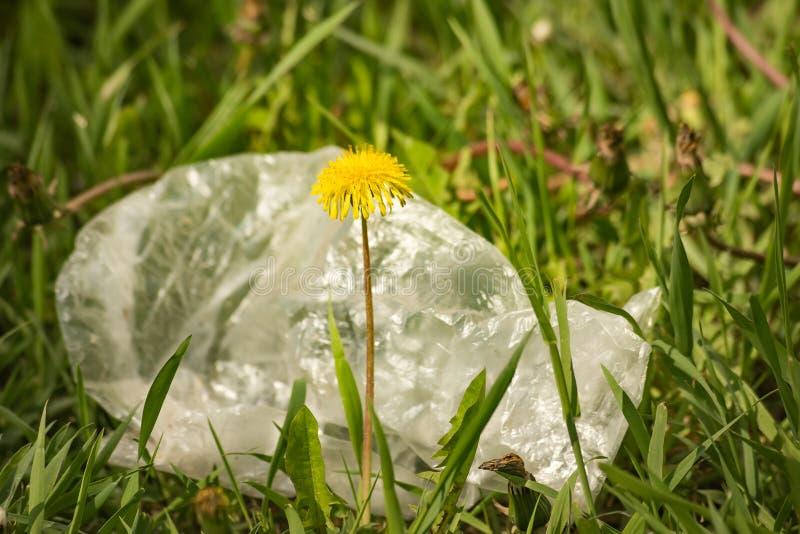 Le sachet en plastique pollue les pissenlits d'environnement photo libre de droits