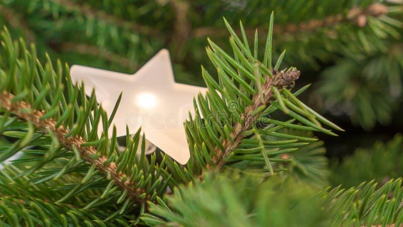 Le sapin décoratif s'embranche avec une étoile lumineuse d'une quirlande électrique photographie stock libre de droits
