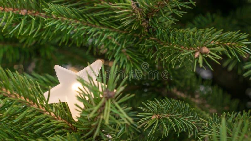 Le sapin traditionnel s'embranche avec une étoile brillante légèrement cachée image libre de droits
