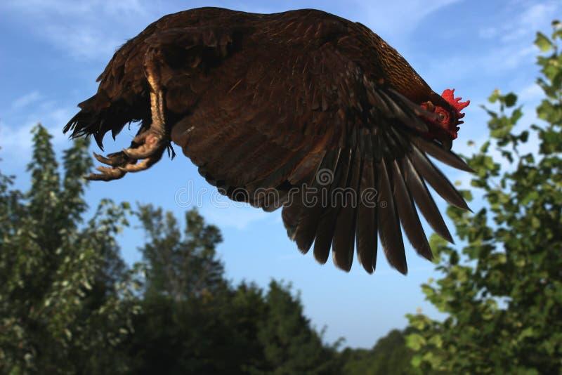 Le saut du poulet image libre de droits