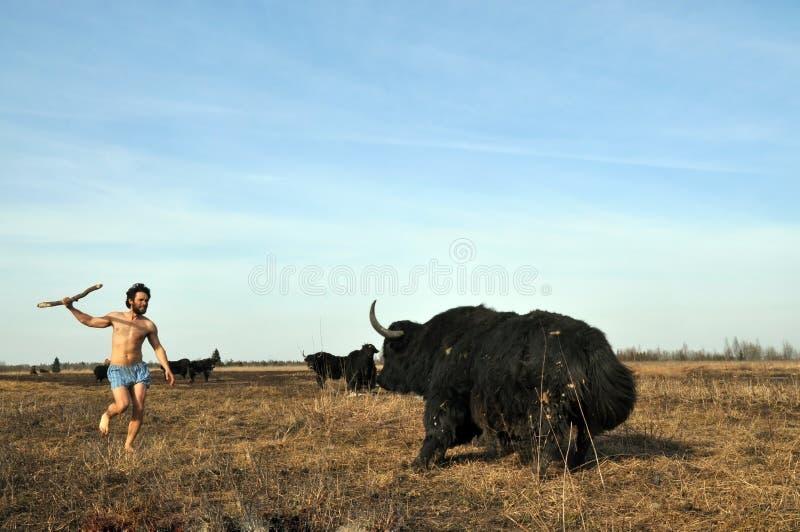 Le sauvage chasse des yaks avec une lance photo libre de droits