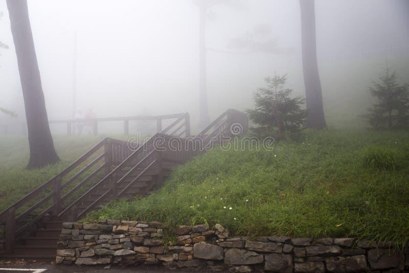 Le scale di legno su erba nebbiosa hanno coperto la collina fotografia stock