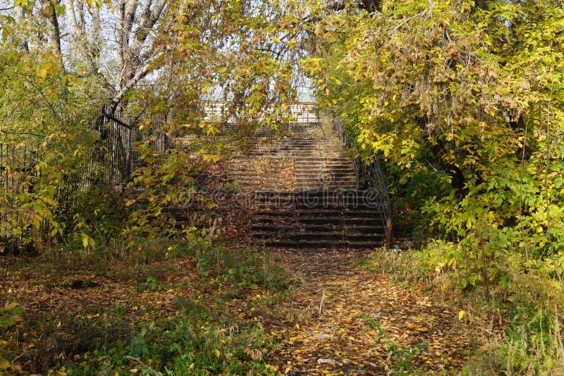 Le scale sono invase con gli alberi fotografie stock libere da diritti