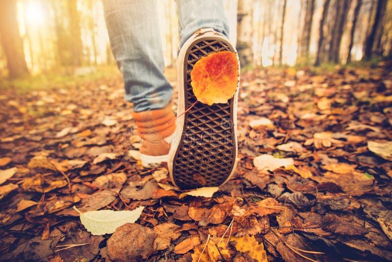 Le scarpe da tennis dei piedi della donna che camminano sulla caduta lascia all'aperto fotografie stock libere da diritti