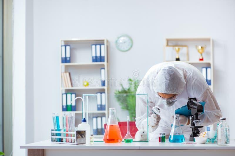 Le scientifique faisant l'expérience sur des animaux dans le laboratoire avec le lapin images stock