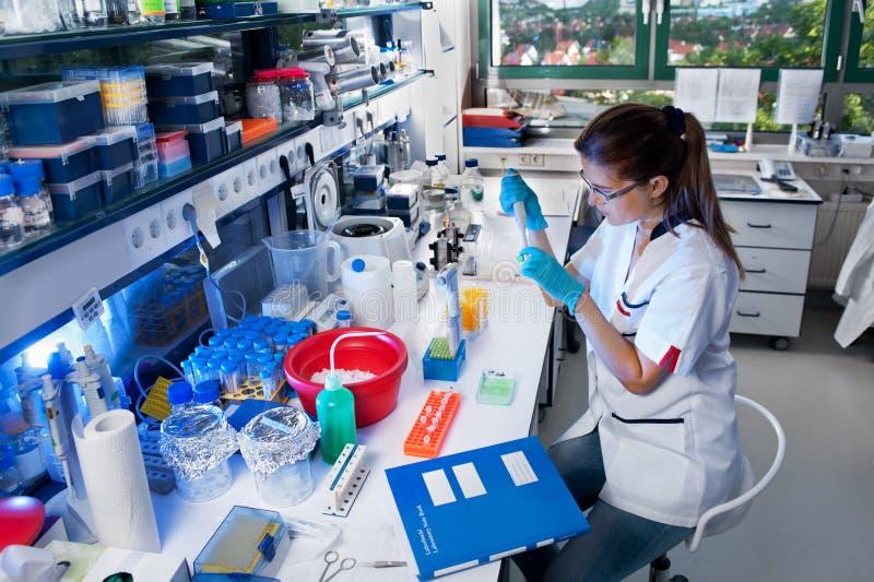 Le scientifique travaille dans le laboratoire image stock