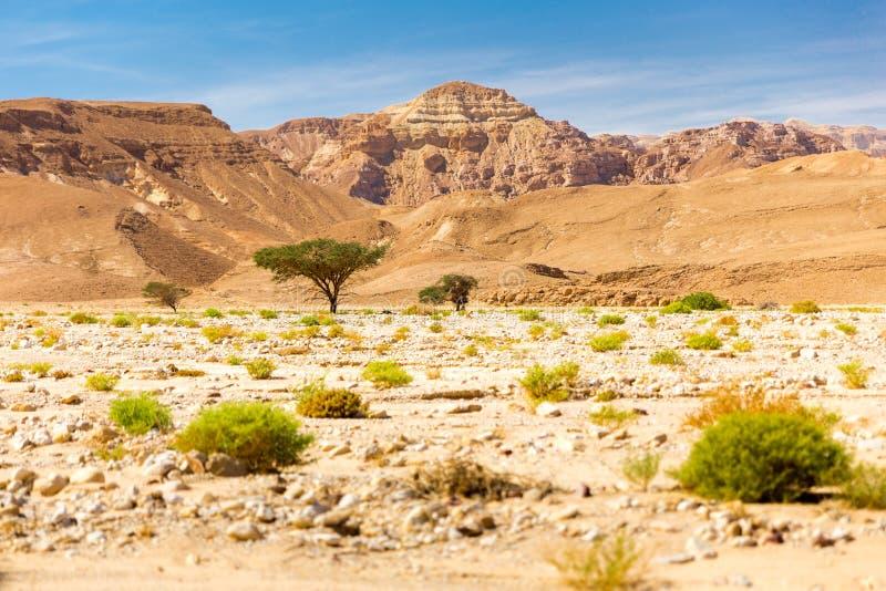 Le scogliere della cresta della montagna del deserto abbelliscono la vista, natura di Israele immagine stock libera da diritti