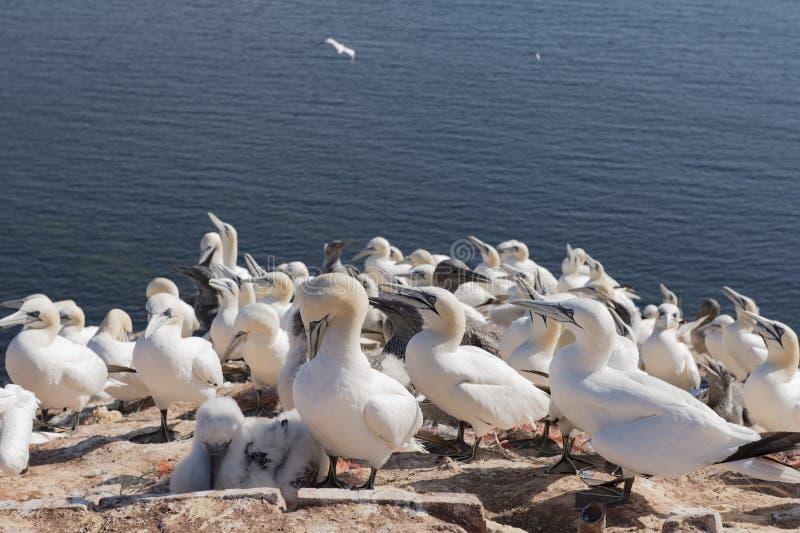 Le scogliere rosse sull'isola Helgoland Germania fotografie stock