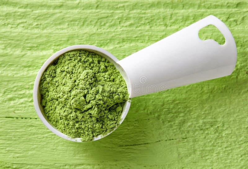 Le scoop de mesure de l'orge ou le blé engazonnent la poudre sur le backgro vert photographie stock