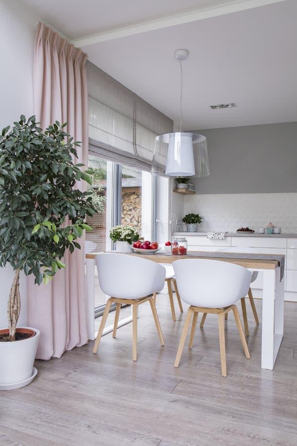 Le sedie bianche alla tavola nell'interno moderno della sala da pranzo con la pianta ed il rosa copre Foto reale fotografia stock libera da diritti