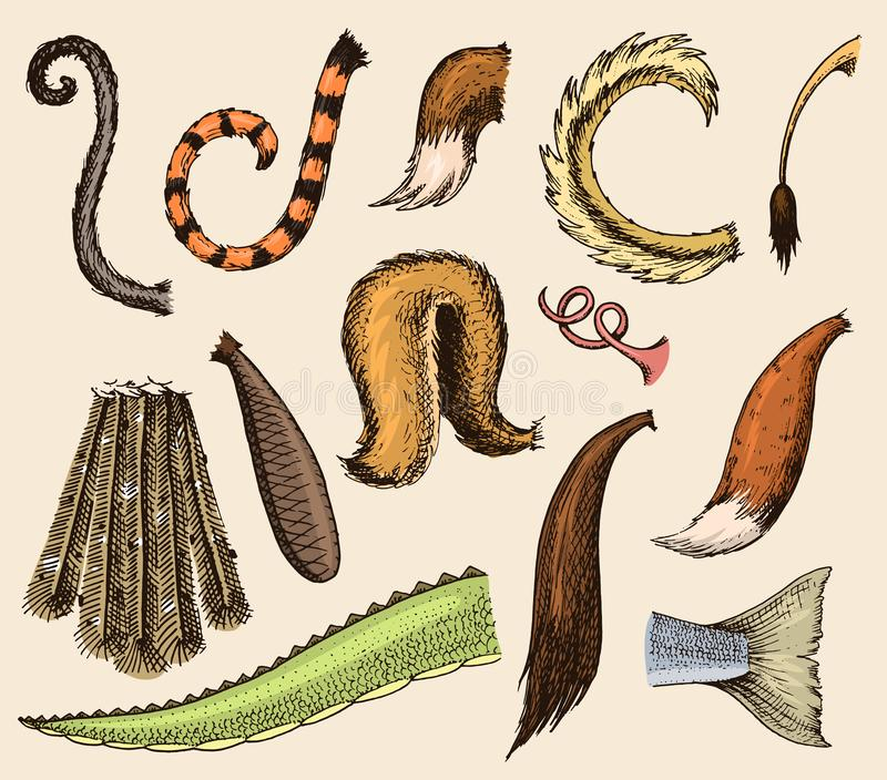 Le sein coupé la queue animalistic de queue animale avec les plumes velues de l'illustration de membre du tailend la brosse de le illustration libre de droits
