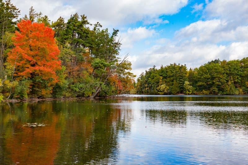 Le sentier de Bond Lake Oak Ridges images stock