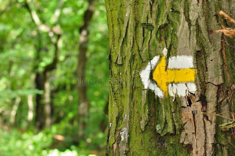 Le sentier de randonnée jaune et blanc signe des symboles sur l'arbre photographie stock libre de droits