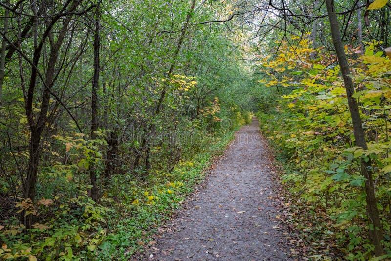 Le sentier forestier et les arbres images libres de droits