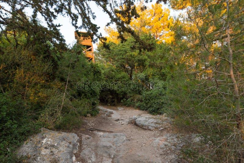 Le sentier piéton menant par la forêt de Hanita et le tour de guet depuis la guerre israélienne de l'indépendance, en Israël du n photographie stock libre de droits