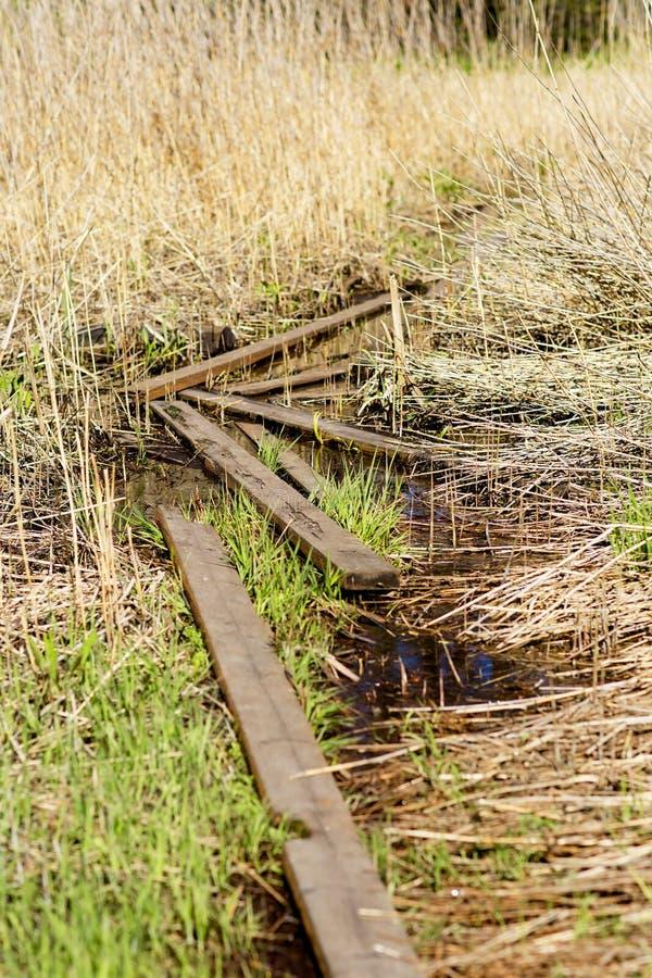 Le sentier piéton parmi les herbes grandes sur le marais images stock