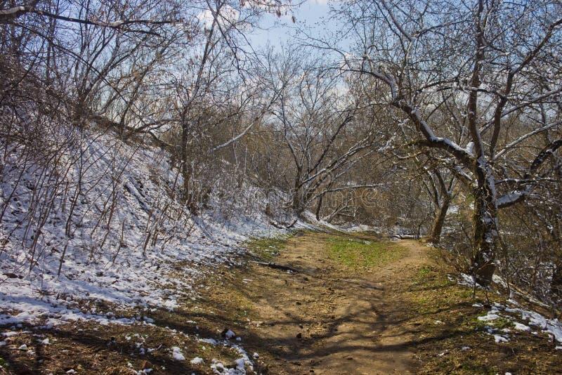 Le sentier piéton pierreux parmi des arbres couverts fortuit a lâché en avril la neige photographie stock libre de droits