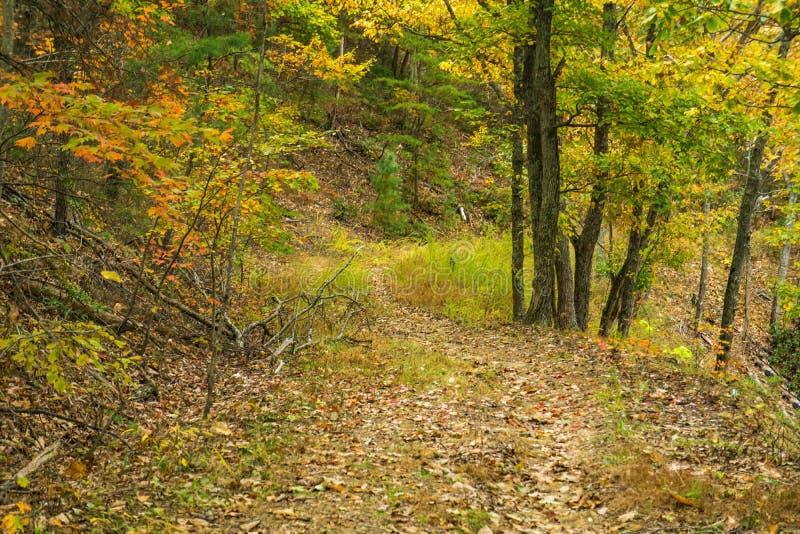 Le sentier Woodland dans les montagnes Blue Ridge images stock