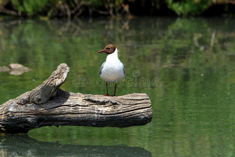 Le sentineel dans la lagune photos stock
