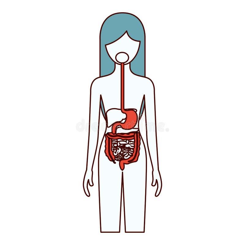 Le sezioni di colore profilano della persona femminile con il corpo umano dell'apparato digerente illustrazione vettoriale