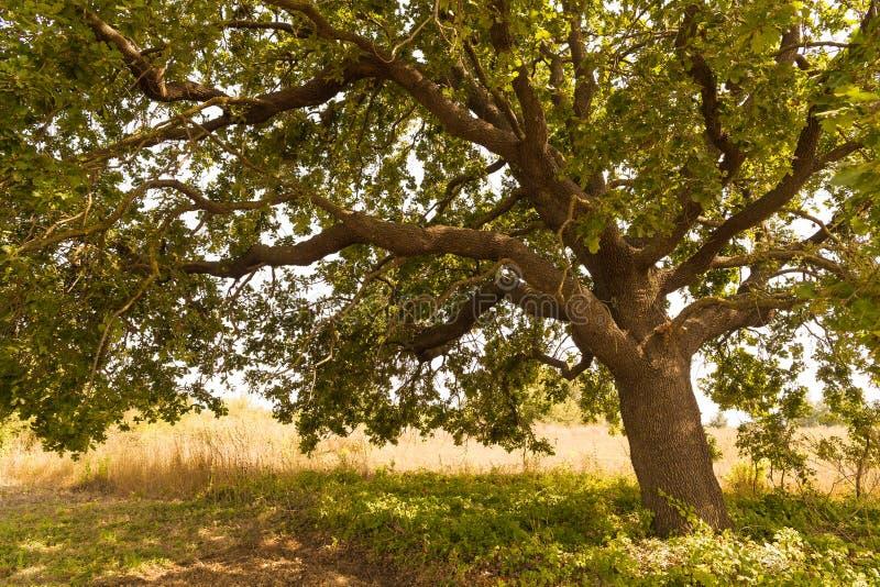 Le shandow de l'arbre un s'embranche écologie photo stock