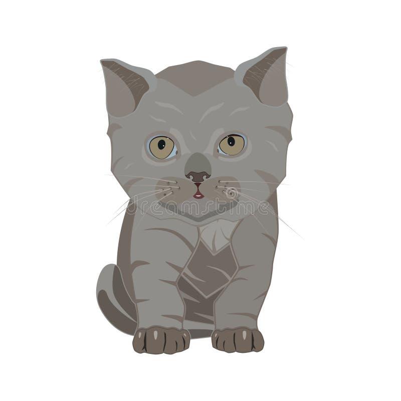 Le shorthair britannique multiplient l'illustration plate de vecteur triste de chaton illustration de vecteur