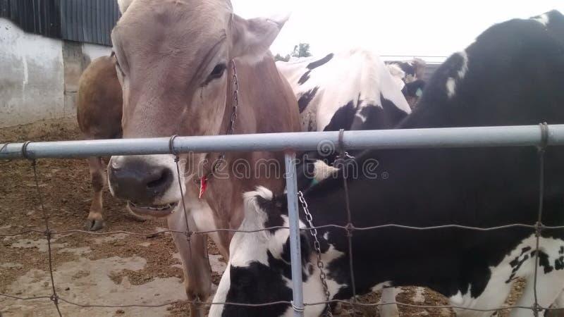 Le signore sull'azienda agricola immagine stock libera da diritti