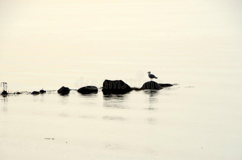 Le siluette di una linea di pietre in acqua calma, un gabbiano ha preso il sedile immagini stock