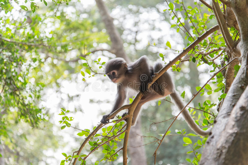 Le singe de bébé accroche sur l'arbre images libres de droits