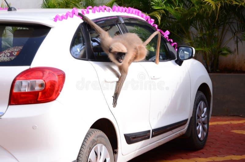 Le singe, roi de singe images libres de droits