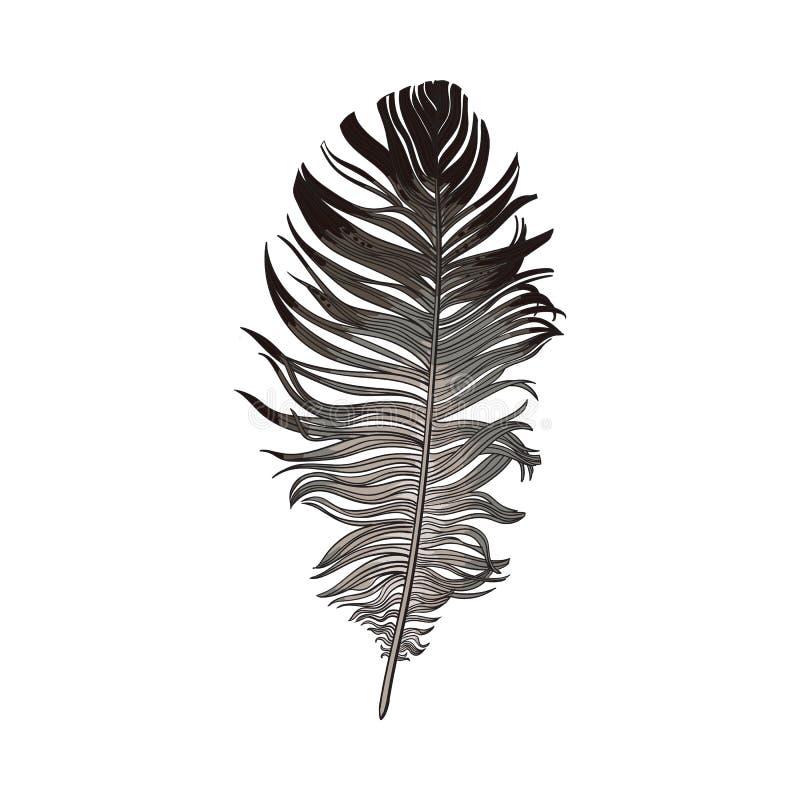 Le smoth tiré par la main noir et le gris ont plongé plume d'oiseau, illustration de vecteur illustration libre de droits