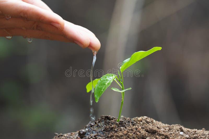 Le soin et l'arrosage de l'arbre ? la main, les mains s'?gouttent l'eau aux petites jeunes plantes, usine un arbre, r?duisent le  photos stock