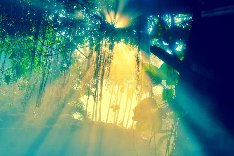 Le soleil écarte dans la forêt image libre de droits