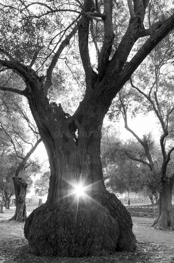Le soleil au milieu images libres de droits