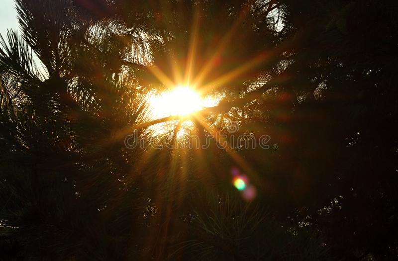 Le soleil brillant par l'arbre image libre de droits