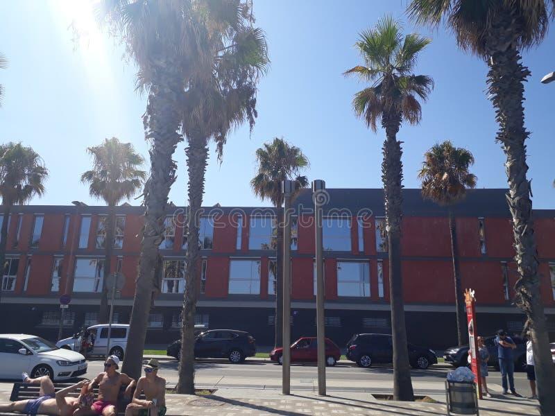 Le soleil d'été de Los Angeles de palmtrees de Barcelone image stock