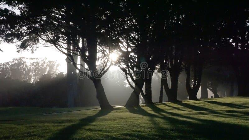 Le soleil d'arbre image stock
