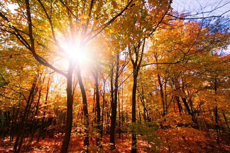 le soleil d'augmenter d'automne photographie stock libre de droits