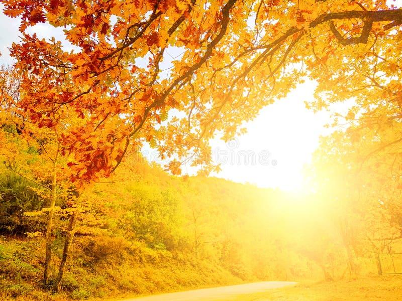 le soleil d'automne sur la route dans des chênes de couleurs d'automne en Tzoumerka Arta Greece photos stock