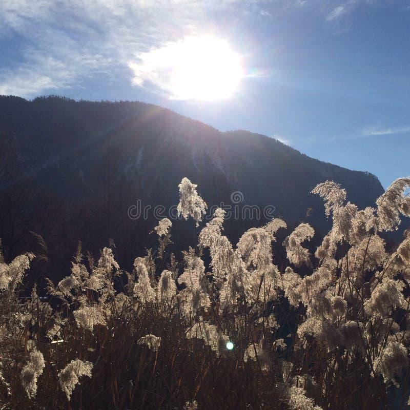 Le soleil d'hiver sur la nature image libre de droits